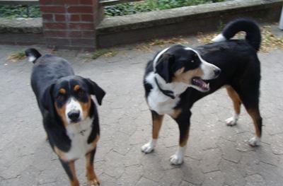 Hof Baumgarte- die Hofhunde Max und Mia