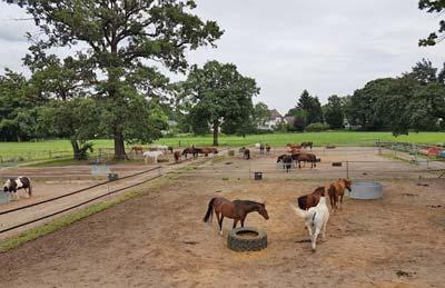 Hof Baumgarte - Pferde im Paddock