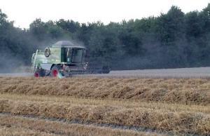 Hof Baumgarte - Getreideernte