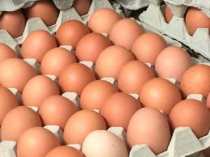 Hof Baumgarte - Hofladen - Eier aus Freilandhaltung