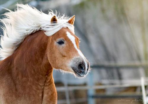 Hof Baumgarte - glückliches Pferd