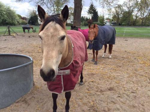 Hof Baumgarte - neugieriges Pferd