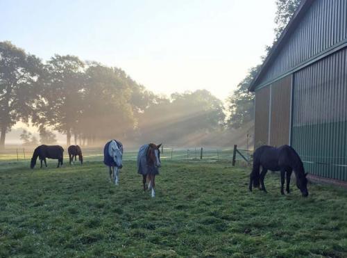 Hof Baumgarte - Pferde im Sonnenaufgang
