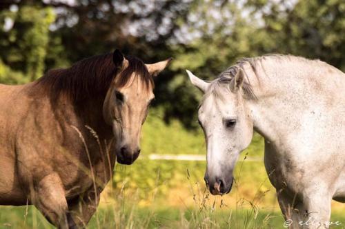 Hof Baumgarte - zwei Pferde